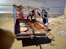 سه چرخه فروشى در شیپور-عکس کوچک