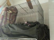 قفس پرنده قناری،مرغ عشق و فنچ. در شیپور-عکس کوچک