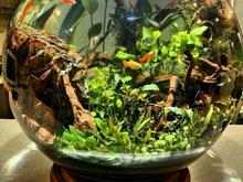 تنگ گیاهی( پلنت ) | تراریوم | پالوداریوم | اکواریوم در شیپور-عکس کوچک