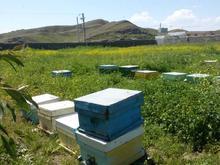 ۸۰ کندو با زنبور عسل(۵ قاب به بالا) در شیپور-عکس کوچک