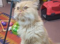 پانسیون خانگی گربه باران  در شیپور-عکس کوچک