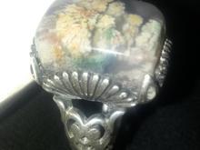 انگشتر شجر فاخر ومتراکم در شیپور-عکس کوچک