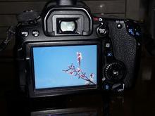 دوربین حرفه ای کانن 70D در شیپور-عکس کوچک