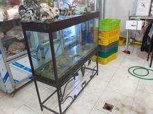 فروش آکواریوم سالم و بزرگ  در شیپور-عکس کوچک