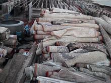 قالیشویی ومبل شویی مجاز دالاهو  در شیپور-عکس کوچک