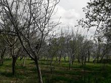 باغ و گاوداری50000 متر در شیپور-عکس کوچک