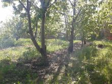 150 متر باغچه با کاربری مسکونی در جاده طالقان در شیپور-عکس کوچک