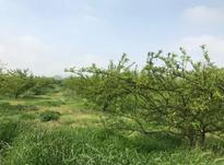 زمین کشاورزی بمساحت 2000 متر با سند شورایی در شیپور-عکس کوچک