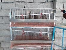 فروش قفس کبک در شیپور-عکس کوچک