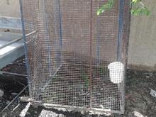 دوعدد گنجه کفتر  در شیپور-عکس کوچک