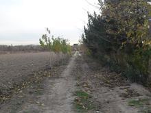 1000 متر باغچه کشاورزی زراعی در شیپور-عکس کوچک