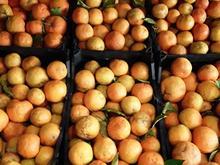 نارنج تازه چیده کیلویی 2800  در شیپور-عکس کوچک