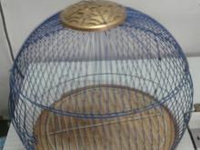 قفس طرقه کرخ ای شکل در شیپور-عکس کوچک