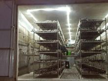 کارخانه قارچ20000 متری  در شیپور-عکس کوچک