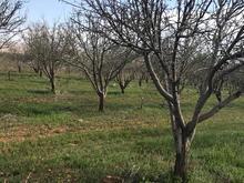 باغ 1000شهری درخت ثمری در شیپور-عکس کوچک
