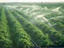 زمین کشاورزی بارانی اجازه داده میشود در شیپور-عکس کوچک