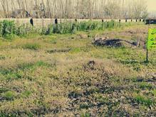 1000مترزمین در شمال لاهیجان_رودبنه در شیپور-عکس کوچک