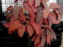 درختچه مصنوعی پاییزی در شیپور-عکس کوچک