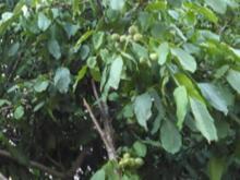 جویای کار نگهبانی وسرایداری باغ ویلا  در شیپور-عکس کوچک