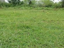 زمین درطبیعت گوراب زرمیخ.روستای ندامان230 متر   در شیپور-عکس کوچک