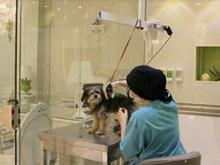 پانسیون شستشو واصلاح انواع سگ وگربه  در شیپور-عکس کوچک
