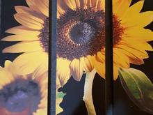 فروش قاب عکس گل آفتابگردان 3 تکه در شیپور-عکس کوچک