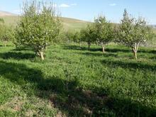 باغ سیب 3000 متر  در شیپور-عکس کوچک