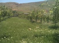 1000متر زمین مسکونی در روستا در شیپور-عکس کوچک