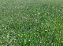 زمین کشاورزی 2500متری مناسب ویلا و باغ در شیپور-عکس کوچک