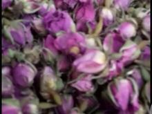 فروش غنچه گل محمدی در شیپور-عکس کوچک