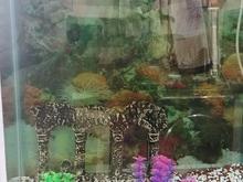 اکواریوم با امکانات در شیپور-عکس کوچک