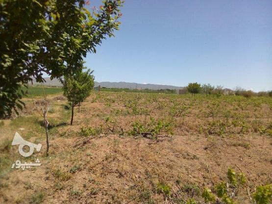 باغ انگور و میوه در 500متری شهر  ابهر  در گروه خرید و فروش املاک در زنجان در شیپور-عکس1