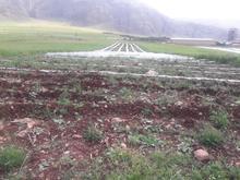 6,000 متر زمین کشاورزی آبی در شیپور-عکس کوچک