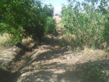 باغ با دیوار  در قرچک یکجا وخورد  5000  در شیپور-عکس کوچک