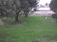4000متر زمین باغی مسکونی در شیپور-عکس کوچک