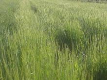 فروش زمین کشاورزی به مساحت 4هزارمتربغل پادگان 24بع در شیپور-عکس کوچک