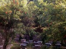 خانه ویلایی 400 متری نوده خاندوز در شیپور-عکس کوچک