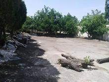 باغ مشجر با سه طرف دیوار و یک طرف هزینه دیوار کشی  در شیپور-عکس کوچک