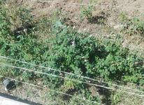 باغ انگور ودرختان میوه در شیپور-عکس کوچک