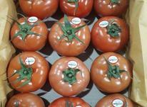 محصولات گلخانه ای درجه یک درسازه های استاندارد  در شیپور-عکس کوچک