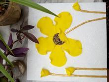 فروش  تابلوی گل برجسته،برتا،پاکو...قیمت مناسب در شیپور-عکس کوچک