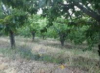 زمین کشاورزی الموت قزوین  10000 متر در شیپور-عکس کوچک