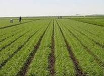 زمین کشاورزی35000 متر  در شیپور-عکس کوچک