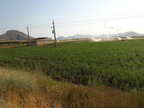 فروش6000 متر زمین کشاورزی در گروه خرید و فروش املاک در کردستان در شیپور-عکس1