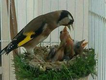 مشاوره رایگان درباره ی انواع پرنده در شیپور-عکس کوچک