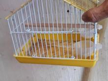 قفس زیبا پرنده  یا همستر و سهره  در شیپور-عکس کوچک