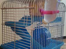 قفس بسیار نو و تمیز همستر در شیپور-عکس کوچک
