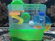 همستر حیوان خانگی در شیپور-عکس کوچک