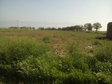300 متر زمین کشاورزی با چاه عمیق در شیپور-عکس کوچک