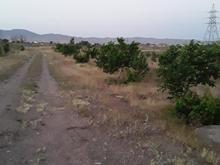 4000 متر باغ میوه گردو گیلاس وانواع درخت  در شیپور-عکس کوچک